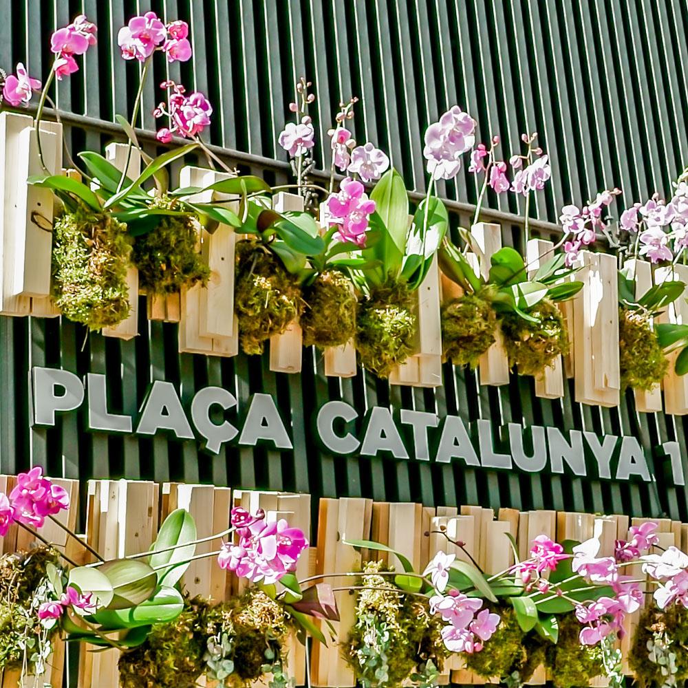 Festes del Roser | Barcelona Shopping Line